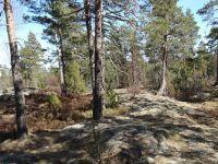 Lisää upeita kallioita ja mäntyjä virkistysalueella